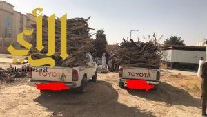 حملة لضبط قائدي المركبات الذين يقومون بالاحتطاب بمدينة سكاكا