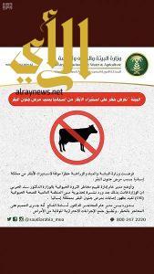 حظر استيراد الأبقار من إسبانيا بسبب مرض جنون البقر