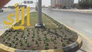 بلدية الخفجي تزين الشوارع والميادين بزراعة 60000 ألف زهرة وتجري صيانة للحدائق