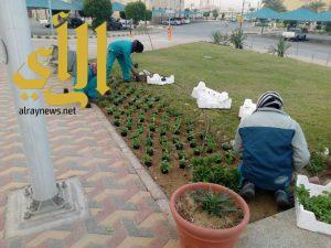 بلدية محافظة الجبيل تزرع 54 ألف شجرة وشتلة ورد بشوارع المحافظة
