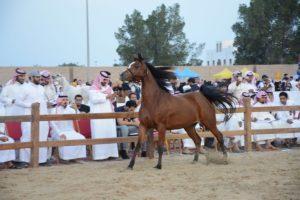 """مزاد الخيول """"عز وهيبة"""" يحقق أرقام كبيرة خلال ٥ ساعات في نسخته الأولى"""