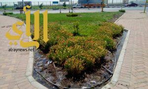 بلدية شرق الدمام تبدأ أعمال صيانة الحدائق والأشجار والمسطحات الخضراء