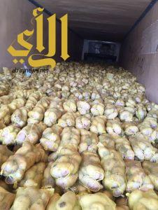 أمانة الشرقية تتلف ٣٦ طن بطاطس غير صالح للاستهلاك الآدمي