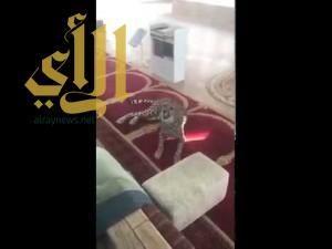 """بالفيديو ..""""فهد"""" يفاجئ المصلين في أحد مساجد بريدة"""