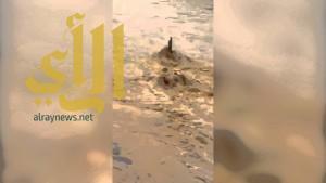 بالفيديو .. مسن وأبناؤه ينقذون عاملاً محتجزاً في وادي حنيفة
