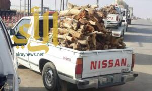 مصادرة شحنات احتطاب مخالفة في ديراب