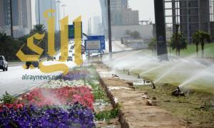 أمانة الرياض تزين ميادين وشوارع العاصمة بـ 3 ملايين زهرة