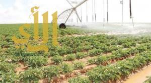 """""""القصيم الزراعية"""" تؤجر مشروعها الزراعي بمركز شري"""