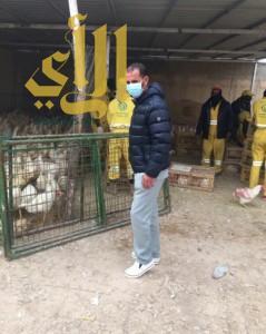 أمانة الرياض تضبط 4 استراحات لتربية الدجاج وذبحها بطريقة غير صحية