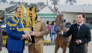 مربط المملكة يعانق ثلاث القاب ذهبية في مصر