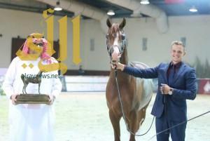 ميداليتان ذهبية وفضية لمربط عذبة في كأس المربين العرب بالإمارات