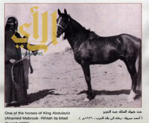 دارة الملك عبدالعزيز تستعرض بعض مقتنياتها حول اهتمام الملك عبدالعزيز بالخيول العربية الأصيلة