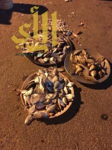 بلدية الخبر تصادر ٢٨٥ كيلو من الأسماك المعروضة بطرق مخالفة