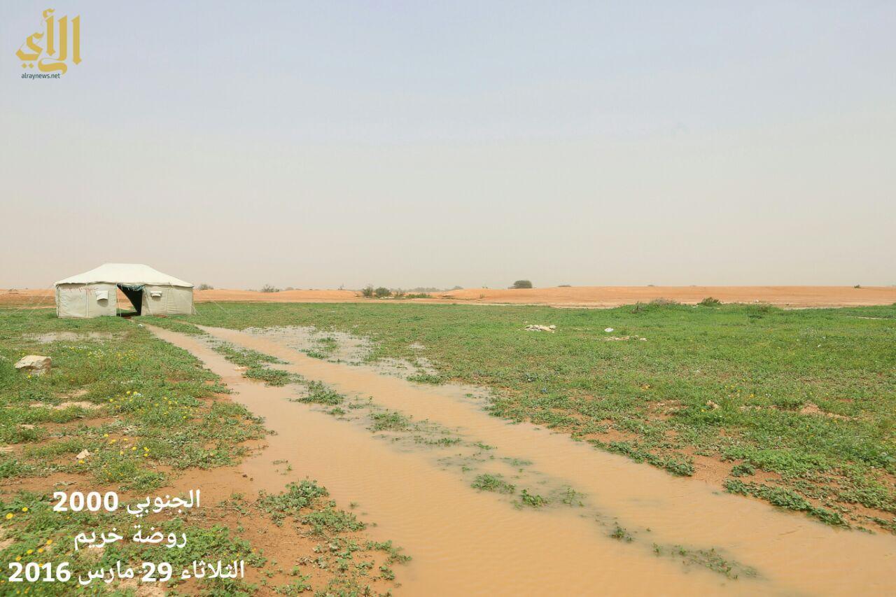 """أمطار روضة خريم وجريان شعيب """"الخويش"""" يوم الثلاثاء 1437/6/20هـ"""
