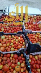 مصادرة 19 طناً من الطماطم الفاسدة في وادي الدواسر