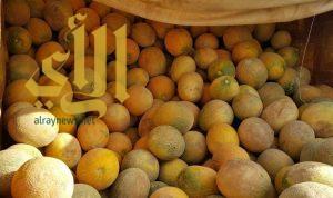 مزارعو وداي الدواسر يشرعون في جني محصول فاكهة الشمام
