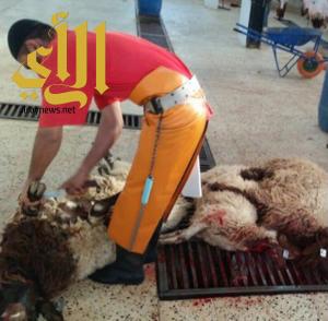 أمانة الشرقية: ١٨٢٠٩ أضحية خلال يومي عيد الاضحى المبارك
