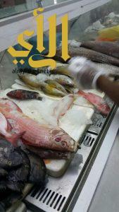 أمانة عسير : تضبط 245كجم سمك فاسد في أبها