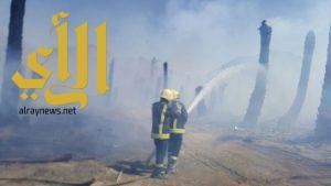 مدني بيشة يباشر حريق في إحدى مزارع النخيل بقرية سحام