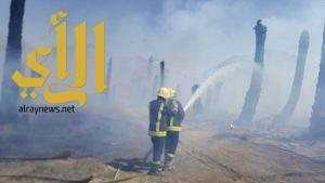 مدني بيشة يخمد حريق بموقعين بمزارع بيشة