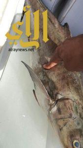 أمانة نجران تباشر بلاغ عن ظبط اسماك يشتبه في سلامتها