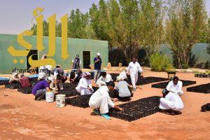 جمعية اصدقاء البيئة تزرع وتغرس 5000 شتلة ارطى بالزلفي