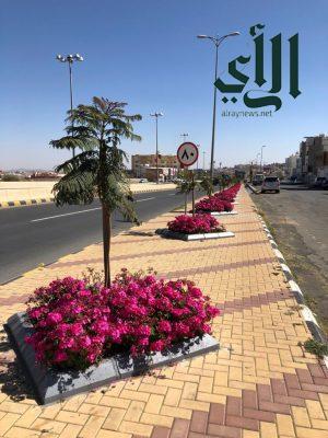 أمانة #عسير تُزيّن حدائق وميادين أبها بأكثر من 72 ألف زهرة موسمية خلال الشهر الماضي