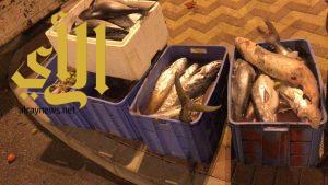 بلدية الخبر :ضبط 600 كيلو من الأسماك مجهولة المصدر بحوزة عمالة وافدة