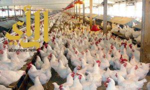 التخلص من 2500 طير مصاب بالإنفلونزا في المزاحمية