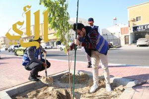 115 شجرة يزرعها 50 متطوع بالتعاون مع بلدية الخبر بالخزامى