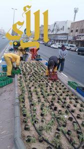 بلدية غرب الدمام: زراعة ٢٥٠ ألف زهرة وتكثيف للجولات الرقابية على المنشآت الغذائية