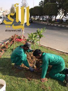 أمانة عسير تزين ميادين أبها بأكثر من 67 ألف زهرة لعيد الأضحى