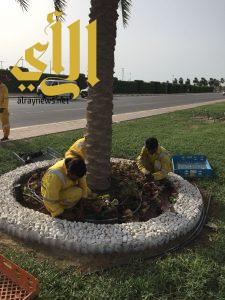 بلدية رأس تنورة: الانتهاء من إنارة شارع الشيماء بحي الأندلس