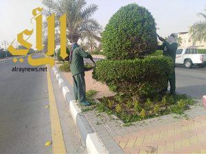 بلدية بقيق: صيانة 175000م2 من المسطحات الخضراء وزراعة 25000 زهرة بالمحافظة خلال عيد الفطر المبارك