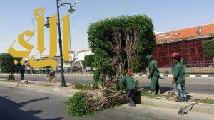 بلدية بقيق تجري صيانة مكثفة للحدائق والشوارع والمسطحات الخضراء
