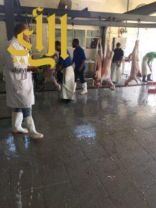 مسلخ القطيف يستقبل أكثر من 2000 أضحية خلال أيام عيد الأضحى المبارك
