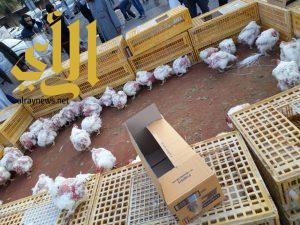 أمانة الشرقية تخلي وتغلق سوق الطيور بالدمام