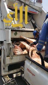 بلدية وسط الدمام تتلف 300 كلجم من اللحوم الغير صالحة للاستهلاك الآدمي