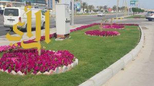 بلدية الجبيل: زراعة 3000 ألاف شجرة بالشوارع والطرق