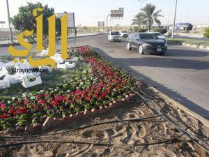 بلدية الجبيل تستكمل تزيين المحافظة بزراعة الزهور الشتوية