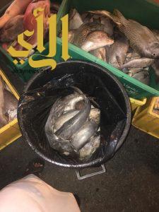 مصادرة 413 كجم أسماك فاسدة بأبها