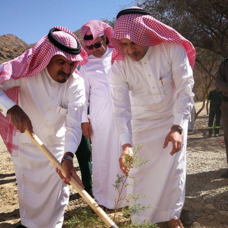 Image result for محافظ المندق يدشن انطلاقة أسبوع الشجرة